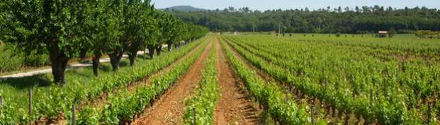 Vineyards Chateau Trians