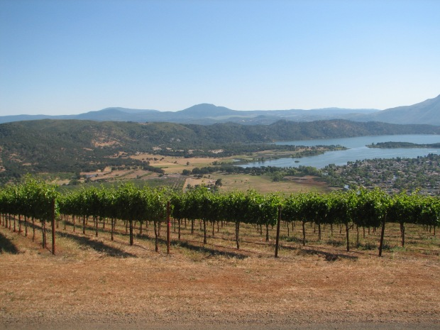 Vineyards of Clay Shannon in the High Valley above Clear Lake California