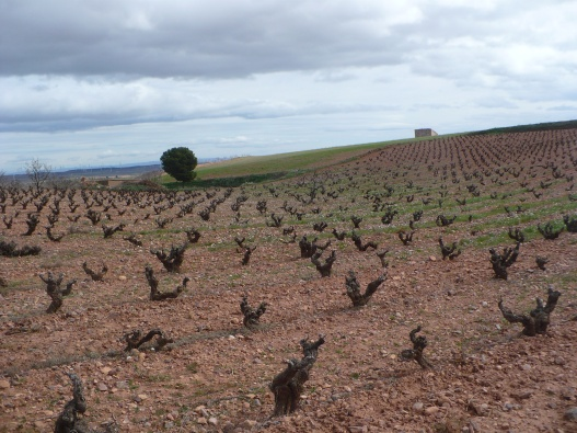 Dormant Old Vine Garnacha - Campo de Borja