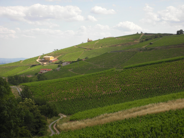 Beaujolais vineyards 2