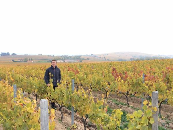 Loic Bulliat in his Morgon vineyard