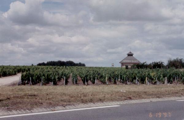 6.3 Bordeaux Medoc Column.PNG