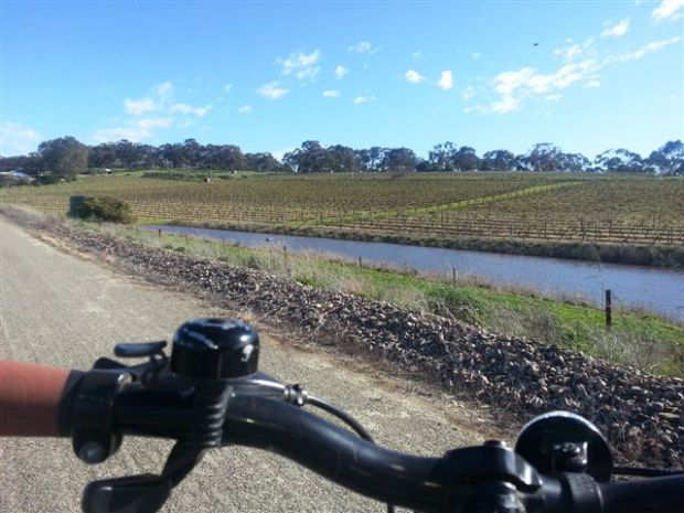 89. Cycling Through Clare Valley - the Riesling Trail.jpg