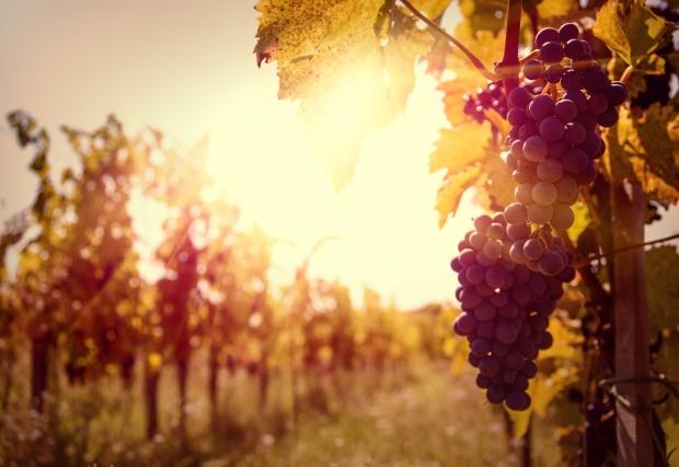 vineyard-sunset.jpg