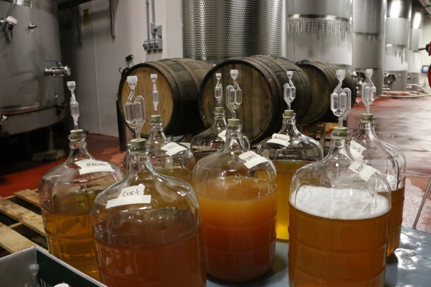 CiderBeginnings.jpg