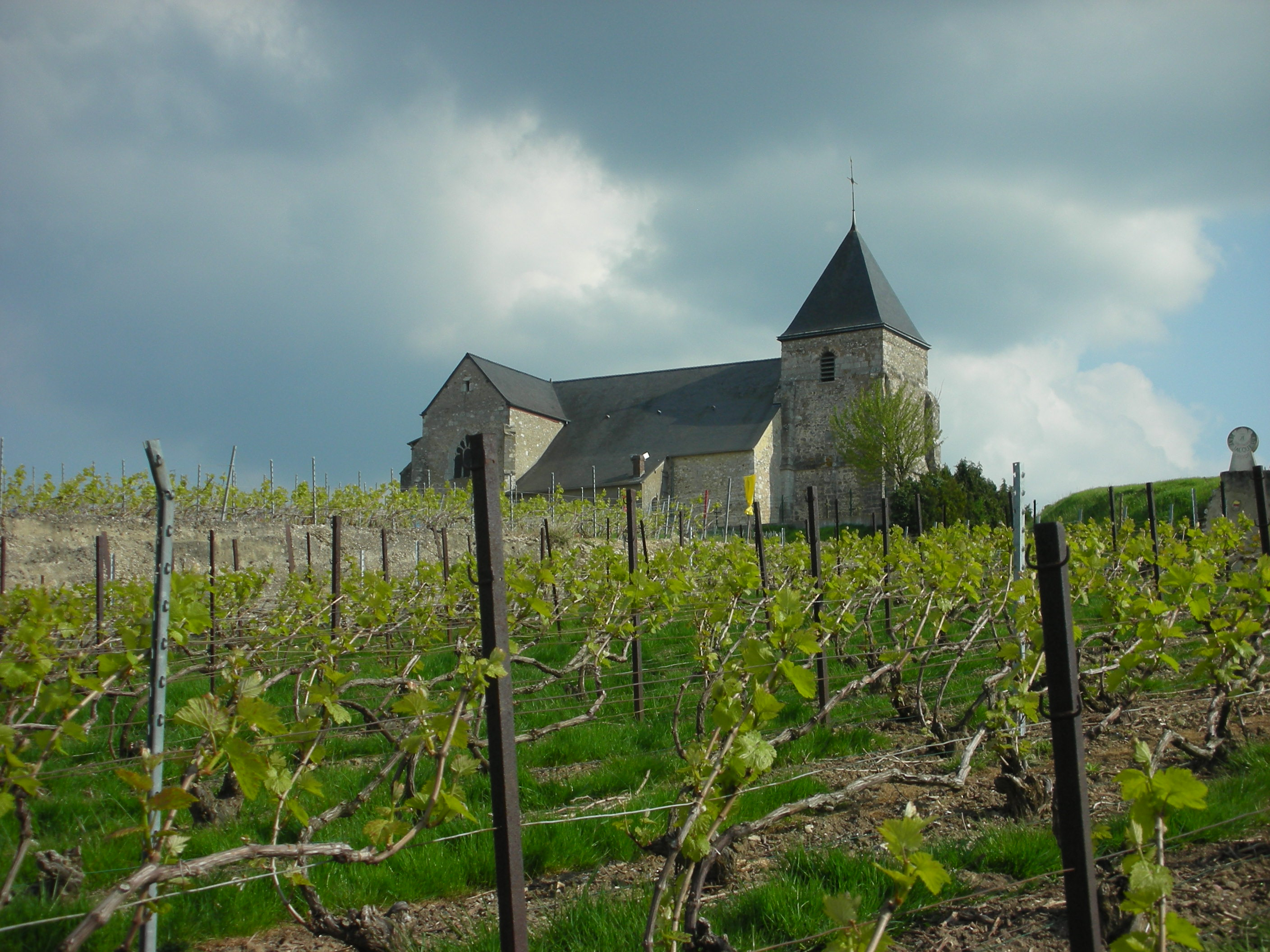 Champagne vineyard, France.jpg
