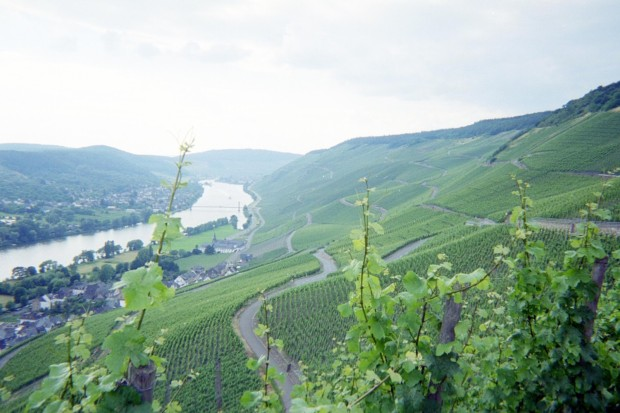 View of the Mosel River Valley near Graach