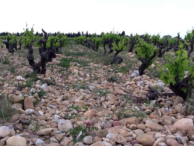 galet-and-grenache