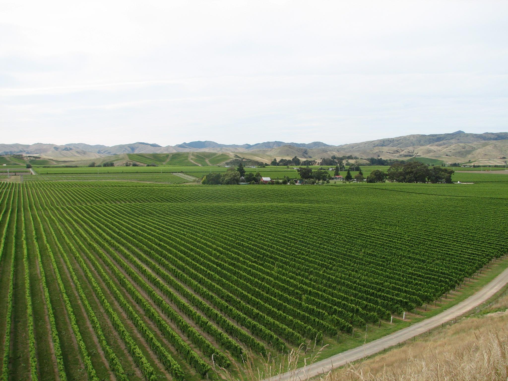 10.3 Brancott Vineyards.JPG
