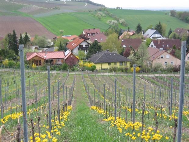 6.3 vineyards at Chapoton.jpg