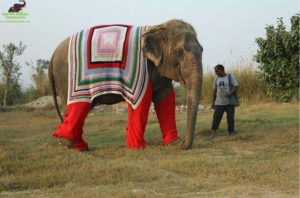 Elephants in sweaters.jpeg