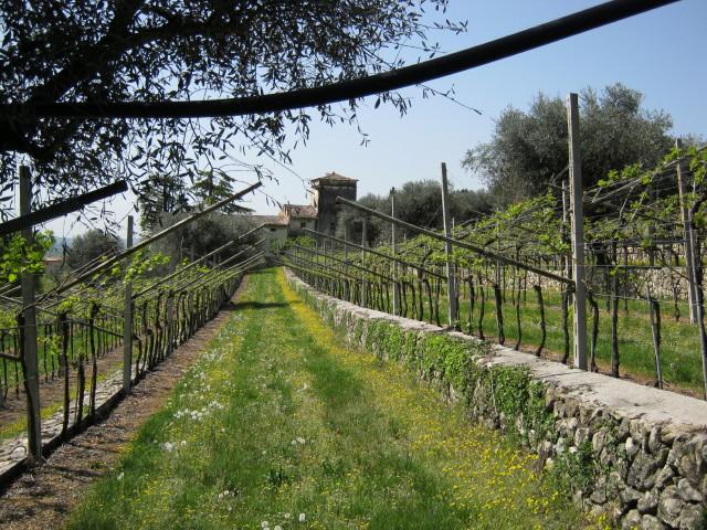 8.10 Springtime in Italy.JPG
