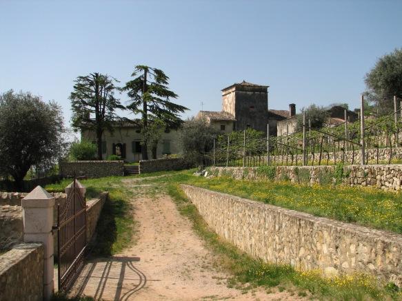 Terraced vineyards at Nicolis' Ambrosan vineyard
