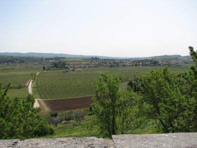 Valley floor vineyards in Valpolicella