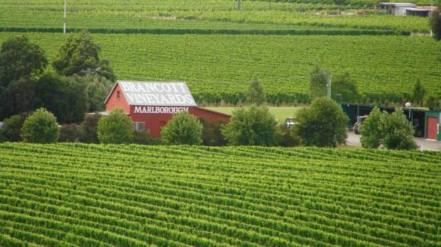Brancott Vineyards Marlborough NZ.jpg