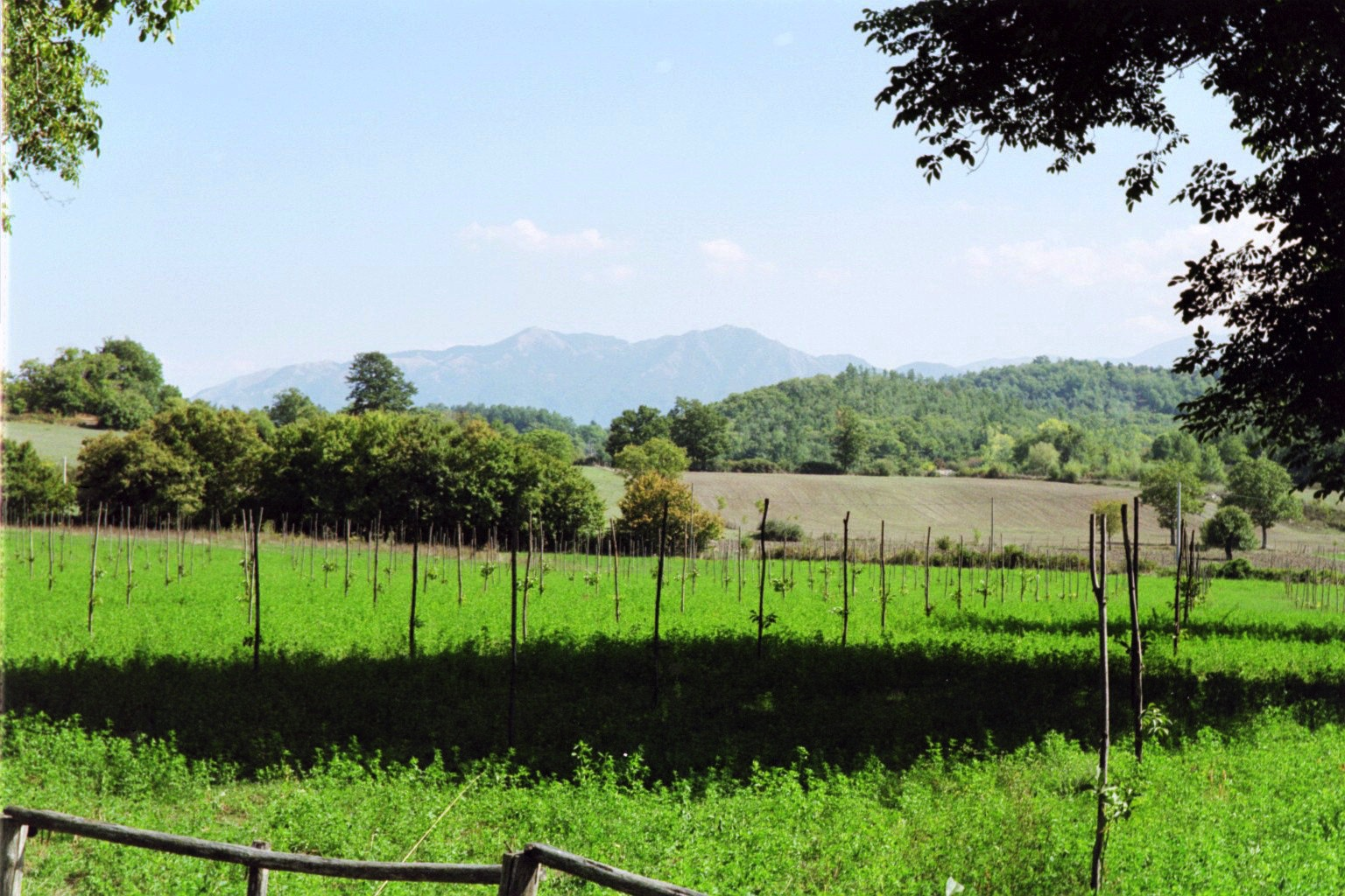 Campania1.jpeg