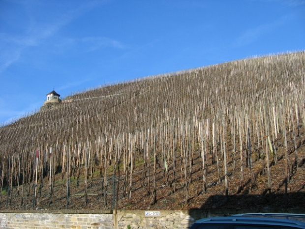 The Doctorberg, the most expensive vines in Germany