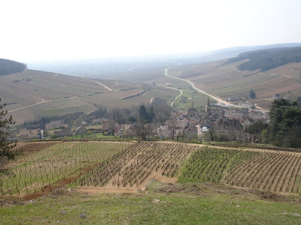 Burgundy vineyards.JPG