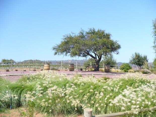 Casas del Bosque.JPG