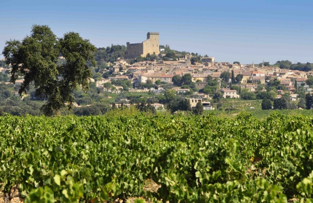 organic vineyard of chateau Gigognan in Chateauneuf du Pape