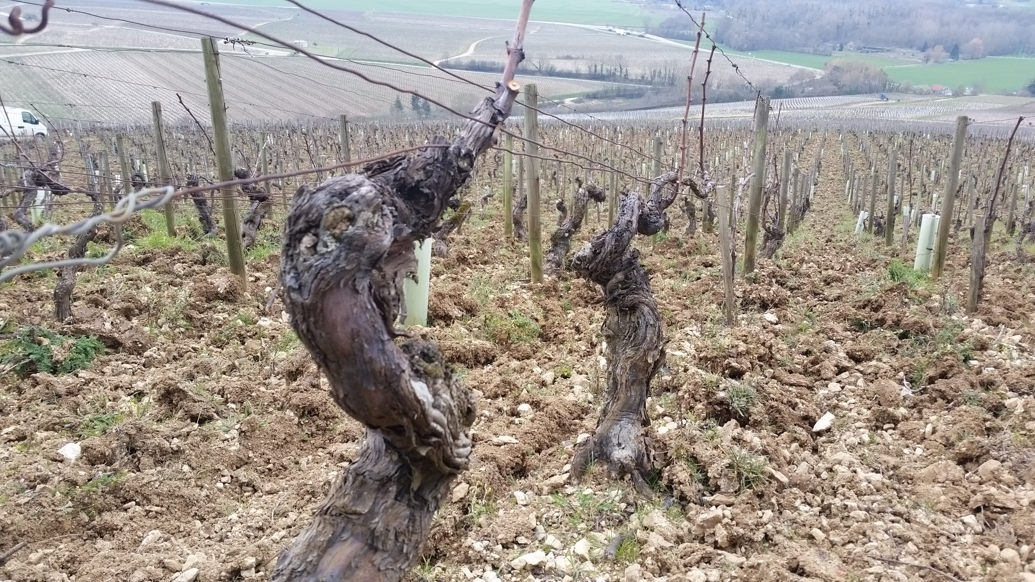Use with 523555 Gueguen Chablis_Chablis vineyard in early March last year.jpg